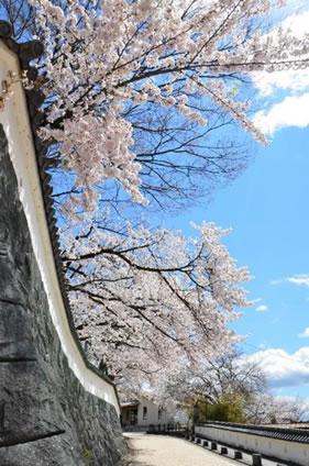 東根城本丸跡の白壁